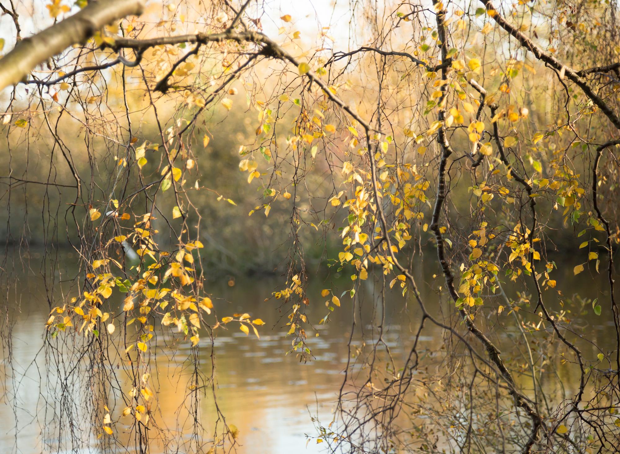 Skønt efterår i Baunemosen